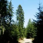 V brdských lesích