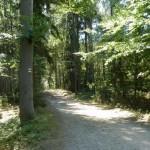 V brdských lesích 2